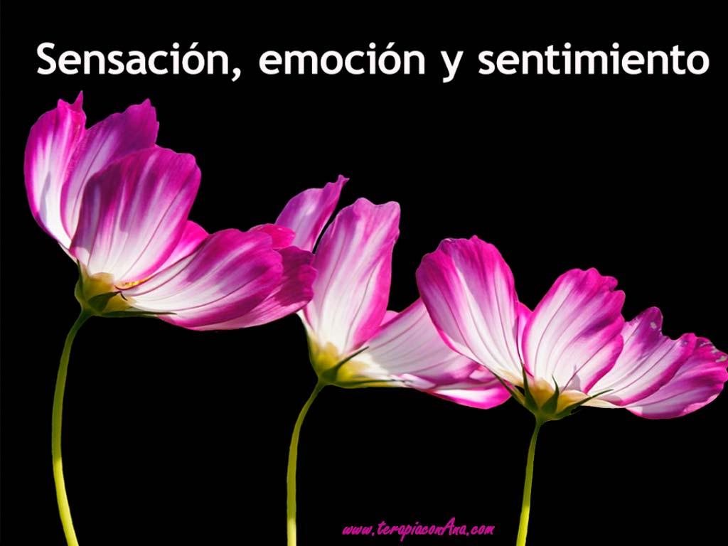 sensación, emoción y sentimiento